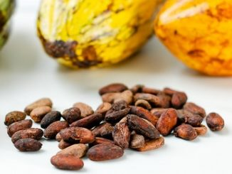 beleggen in cacao